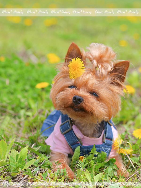 DOG PHOTO#151:2度目のお盆。_c0101341_13043822.jpg