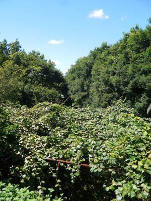 水源キウイ 11月中旬からの収穫に向け、しっかりと手をかけ育てます!キウイフルーツは冬の果物です!_a0254656_18295616.jpg