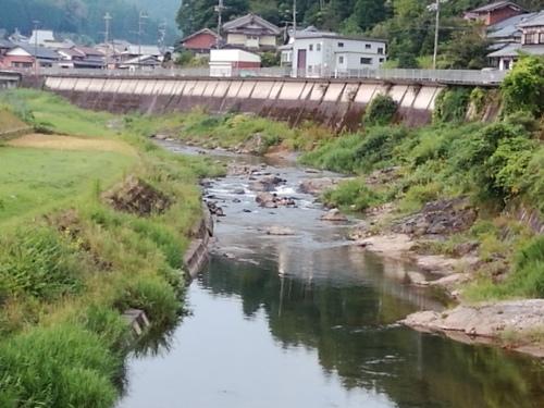 2020/8/14     水位観測  (槻の木橋より)_b0111189_05393412.jpg