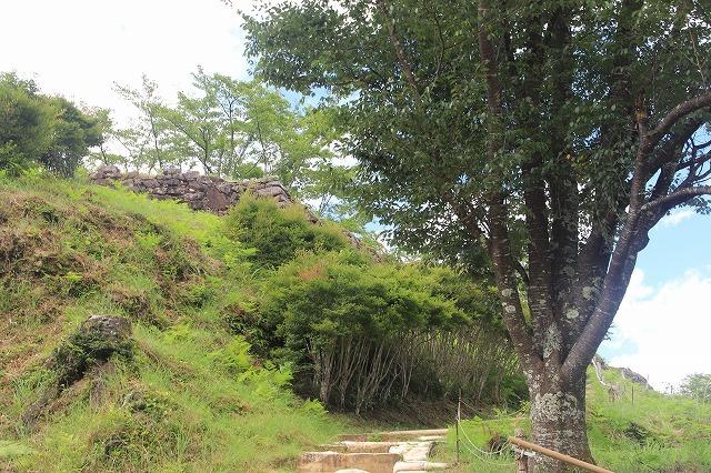 真夏の赤木城跡散策(その2)(撮影:8月10日)_e0321325_11034312.jpg