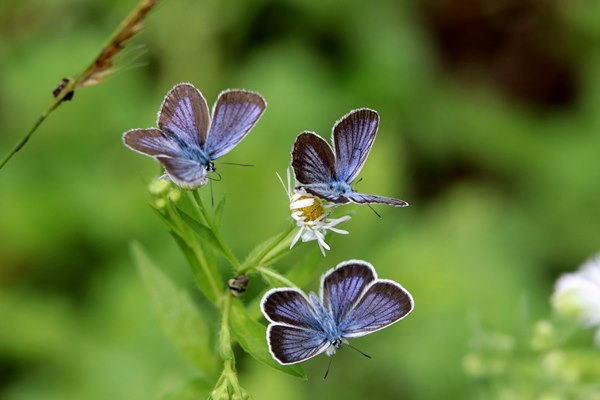 「初夏の蝶」(補遺2)_b0189231_08014758.jpg