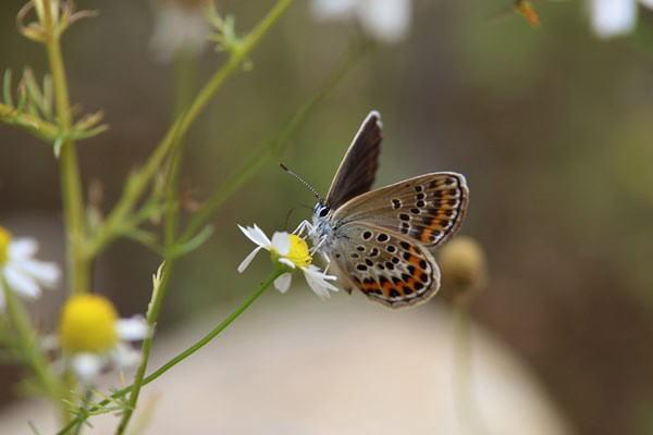 「初夏の蝶」(補遺2)_b0189231_08023898.jpg