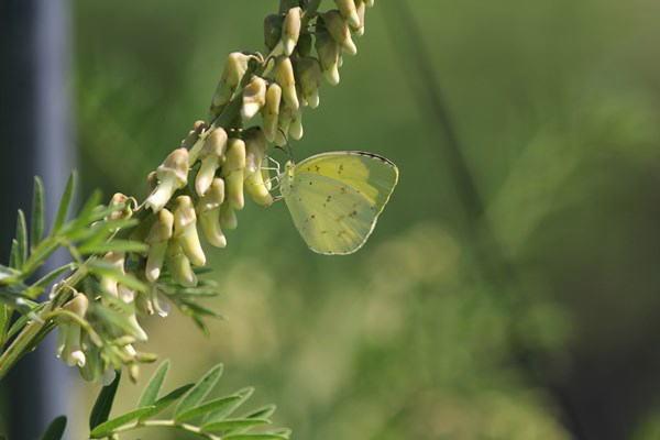 「初夏の蝶」(補遺2)_b0189231_08042172.jpg