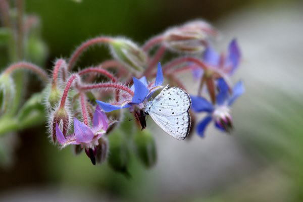 「盛夏の蝶」(7月) 補遺(3部)其の壱_b0189231_18490532.jpg