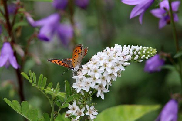 「盛夏の蝶」(7月) 補遺(3部)其の壱_b0189231_18492765.jpg