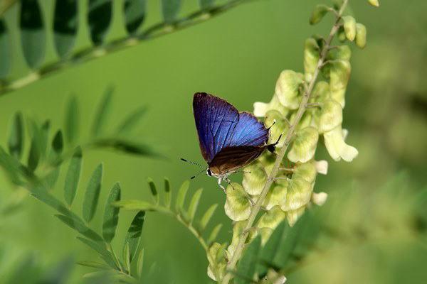 「盛夏の蝶」(7月) 補遺(3部)其の壱_b0189231_18494806.jpg