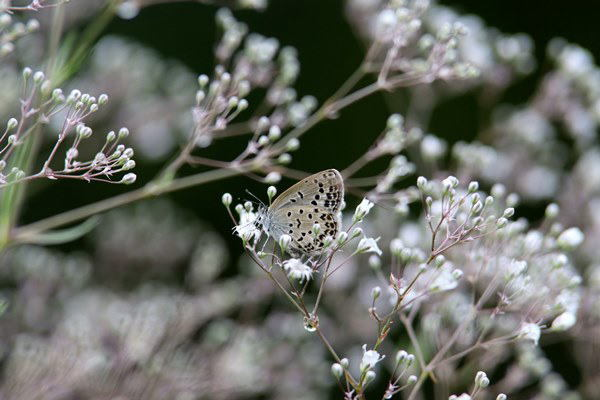 「盛夏の蝶」(7月) 補遺(3部)其の壱_b0189231_18503179.jpg