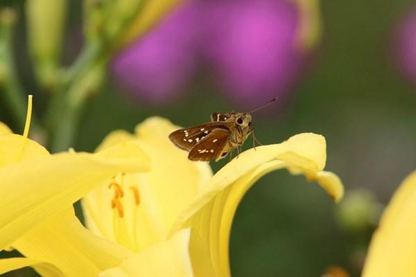 「盛夏の蝶」(7月) 補遺(3部)其の壱_b0189231_18515796.jpg