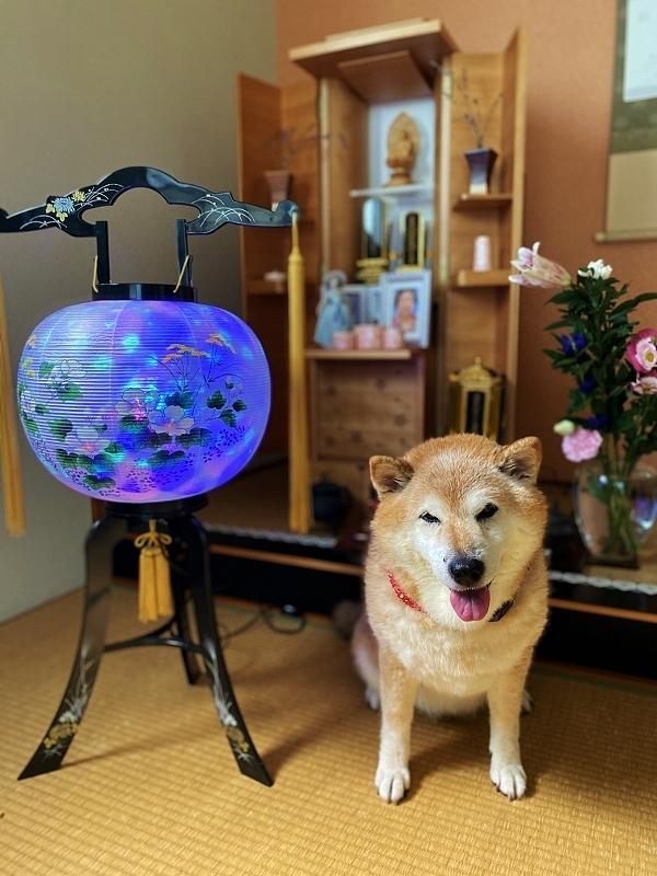 盆提灯と牡丹燈籠_b0314043_09121501.jpg