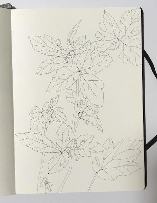 スケッチ「秋明菊の蕾ふくらむ」_a0138978_00134600.jpeg