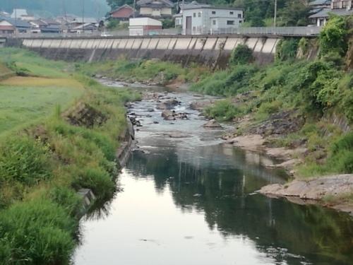 2020/8/15     水位観測  (槻の木橋より)_b0111189_05472165.jpg