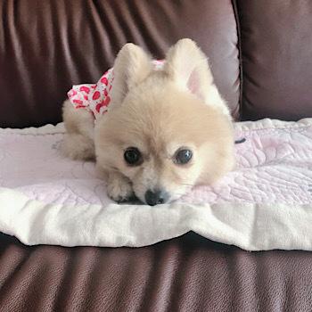 HOGO犬ひらりの近況報告_f0249610_13151302.jpeg