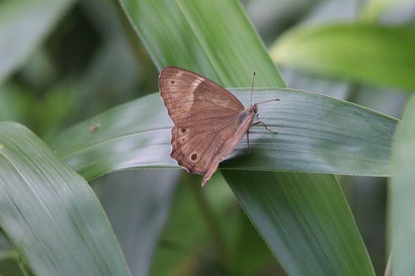 「盛夏の蝶」(7月) 補遺2_b0189231_07190789.jpg