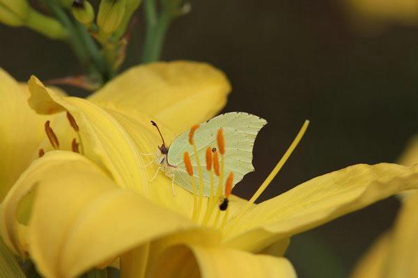 「盛夏の蝶」(7月) 補遺2_b0189231_07204120.jpg