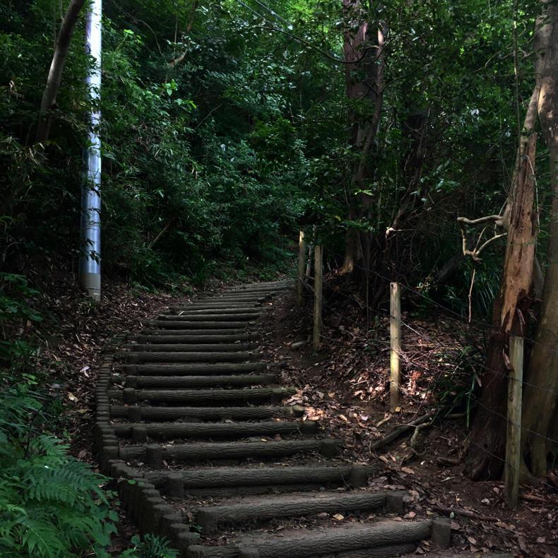 吾妻山から浅間神社へ_c0060143_05024640.jpg