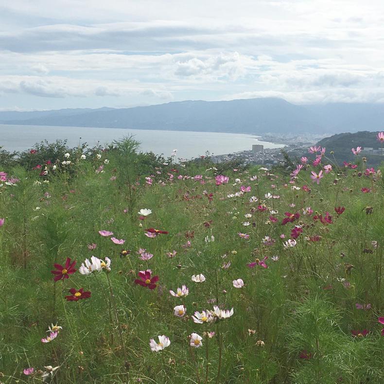 吾妻山から浅間神社へ_c0060143_05033288.jpg