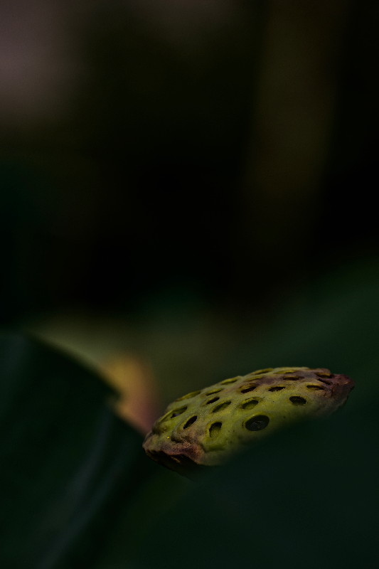 花より果托・・・その④_e0071967_128155.jpg