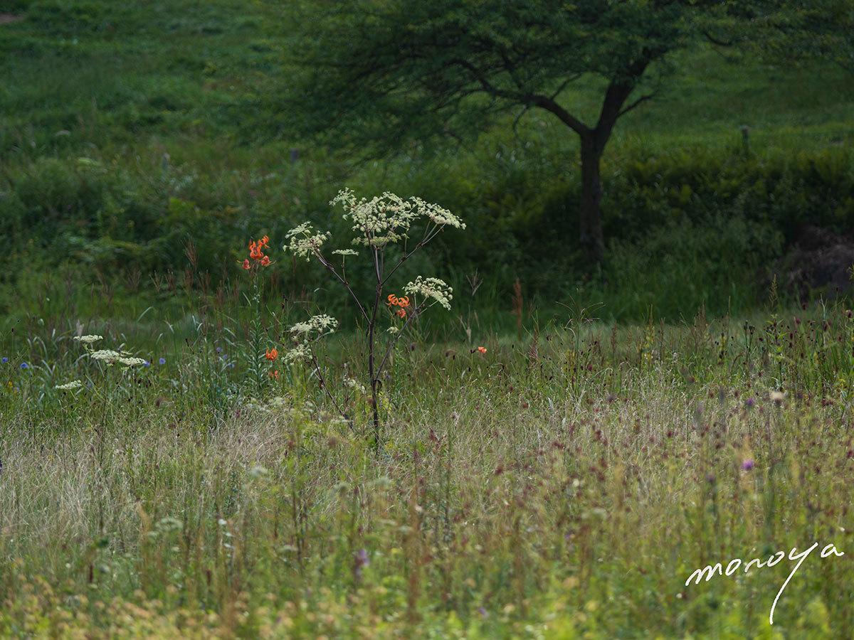 夏の終わりころの高原_c0085877_05103354.jpg