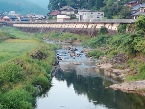 2020/8/16     水位観測  (槻の木橋より)_b0111189_05543611.jpg