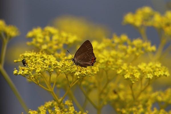 「盛夏の蝶」(7月)・・・・補遺(其の参)_b0189231_21121916.jpg
