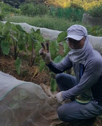酷暑に対応、畑仕事は朝食前に変更8・17_c0014967_13533285.jpg