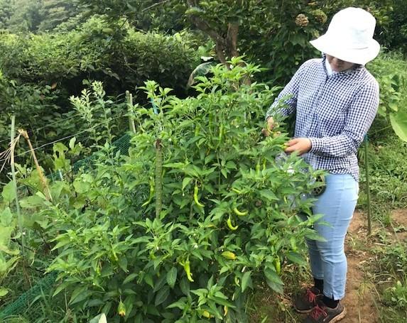 酷暑に対応、畑仕事は朝食前に変更8・17_c0014967_13562679.jpg