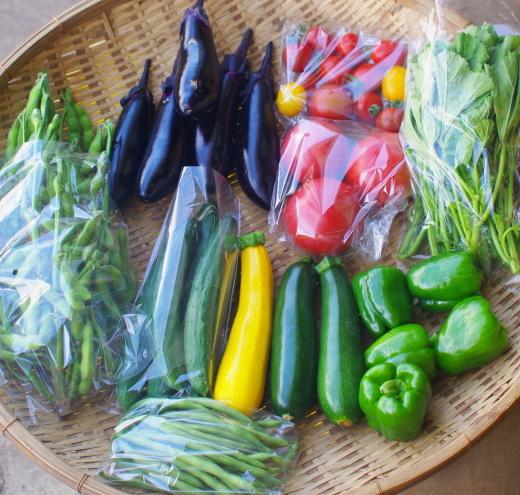 今週の野菜セット(8/18~8/22着)_c0110869_12514686.jpg