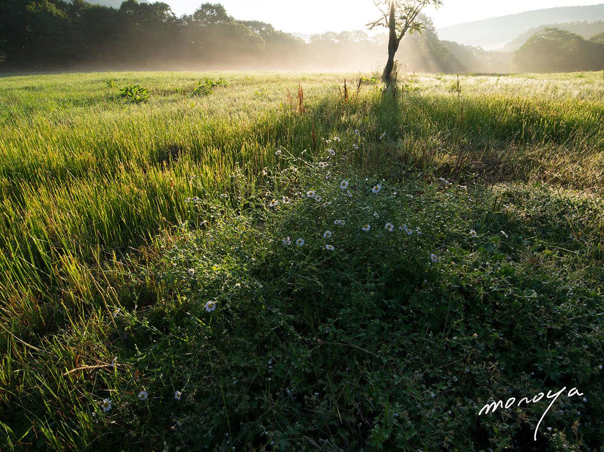 朝の牧場_c0085877_06033783.jpg