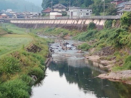 2020/8/17     水位観測  (槻の木橋より)_b0111189_05410152.jpg