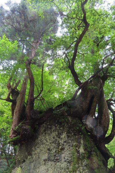 日本の原風景に会いに行きました_b0238249_20261681.jpg