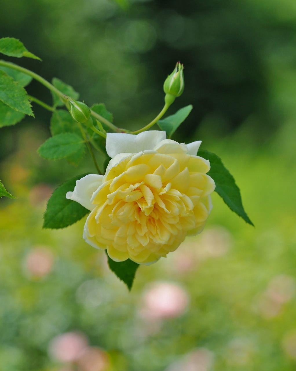 軽井沢レイクガーデンで 猛暑日にも忍び寄る秋が・・・_c0305565_17425930.jpg