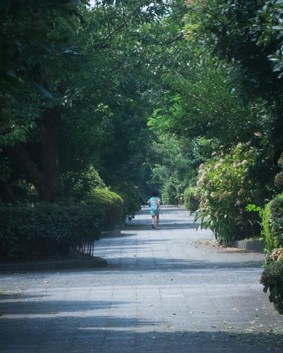 緑の風の通り道。_b0022268_18452786.jpg