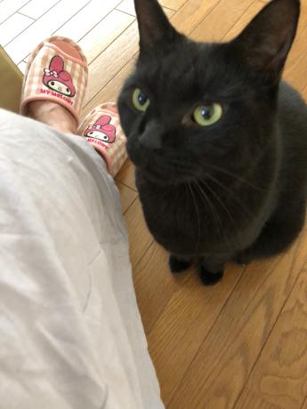 黒猫感謝の日_e0355177_13181900.jpg