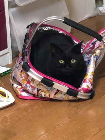 黒猫感謝の日_e0355177_13182230.jpg