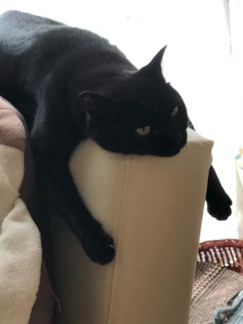 黒猫感謝の日_e0355177_13182345.jpg