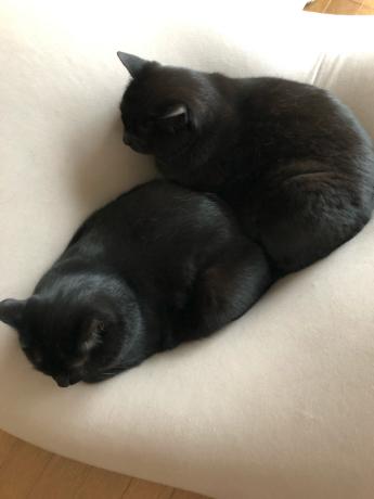 黒猫感謝の日_e0355177_13192839.jpg