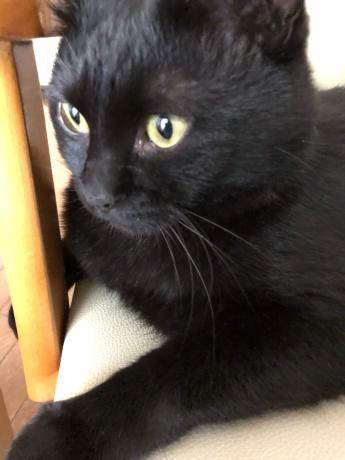 黒猫感謝の日_e0355177_13192918.jpg