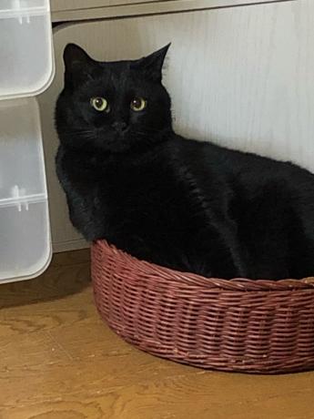 黒猫感謝の日_e0355177_13193291.jpg