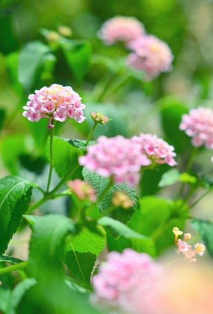 真夏の庭 2020_d0025294_17204139.jpg