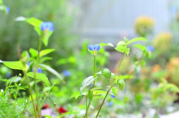 真夏の庭 2020_d0025294_17212318.jpg