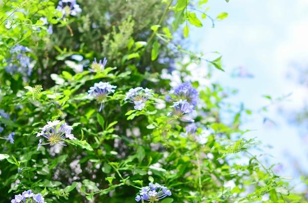 真夏の庭 2020_d0025294_17221800.jpg