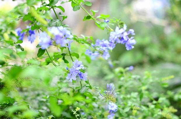 真夏の庭 2020_d0025294_17230679.jpg