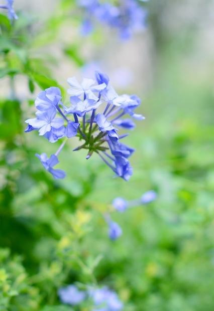 真夏の庭 2020_d0025294_17232357.jpg