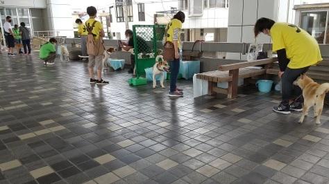 静岡県の犬殺処分=0頭を是非達成へ!_d0050503_12010258.jpg