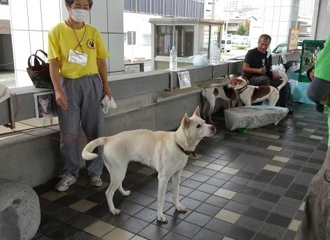 静岡県の犬殺処分=0頭を是非達成へ!_d0050503_12012992.jpg