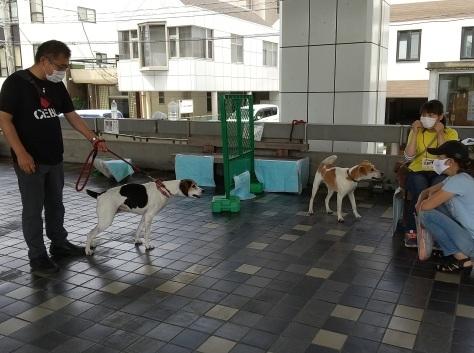 静岡県の犬殺処分=0頭を是非達成へ!_d0050503_12015101.jpg