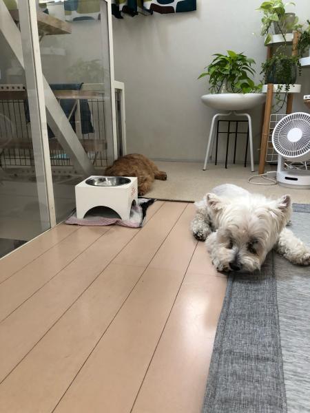 シニア犬との生活〜_b0120217_09211463.jpg