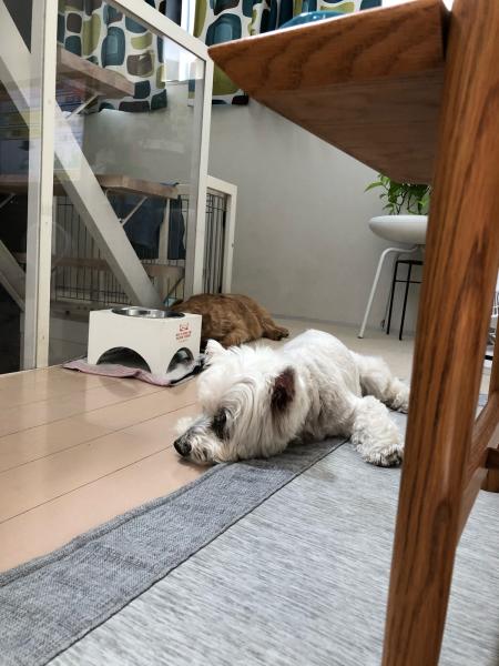 シニア犬との生活〜_b0120217_09212934.jpg