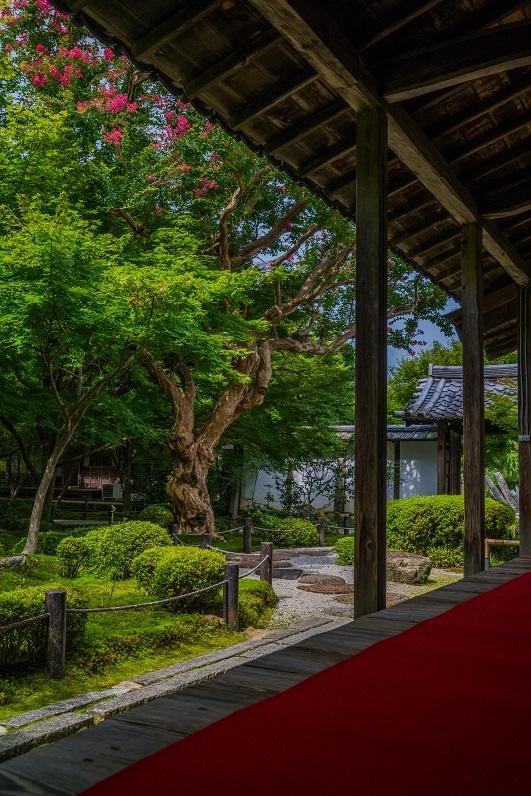 夏の圓光寺と百日紅_e0363038_00141815.jpg