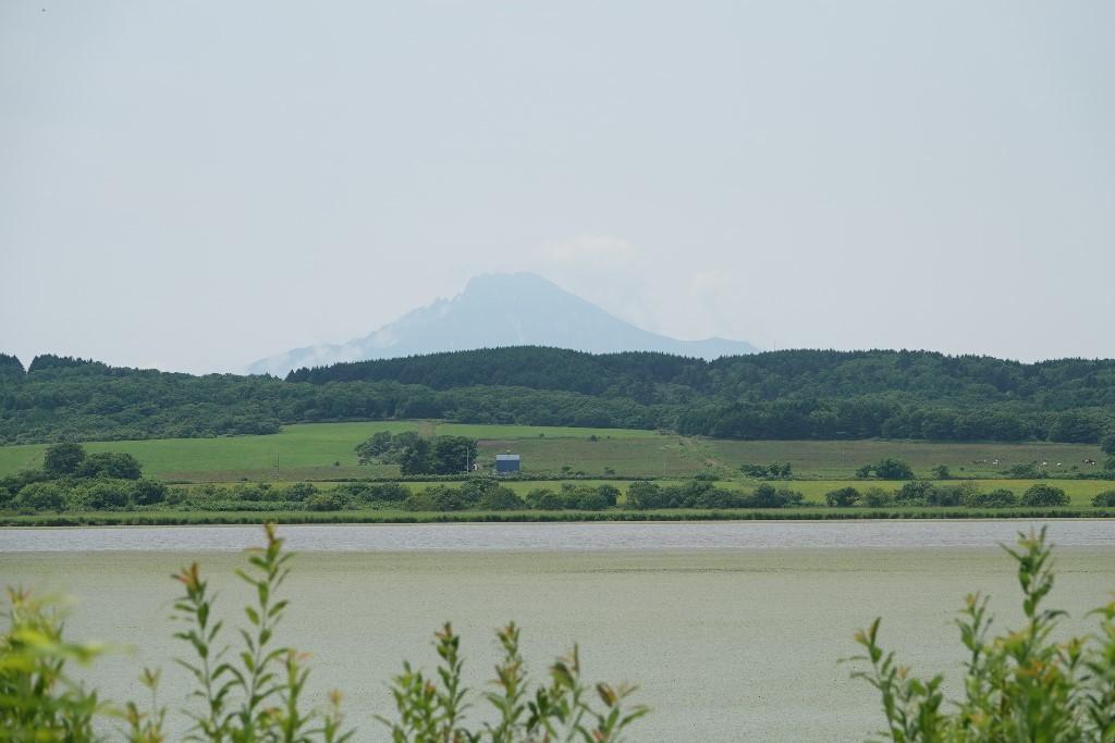 北海道探鳥地放浪の旅  画像編_b0227552_19311346.jpg